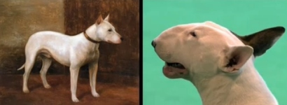 bull-terrier-rakettfuas-conflicted-copy-2012-12-19-2